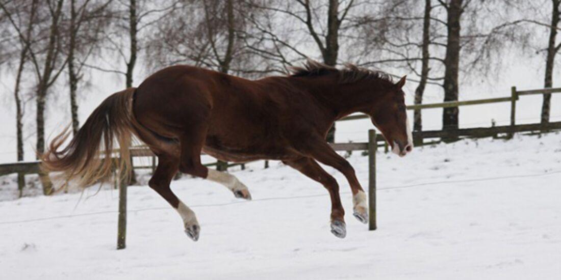 CAV Pferde im Schnee - Tami