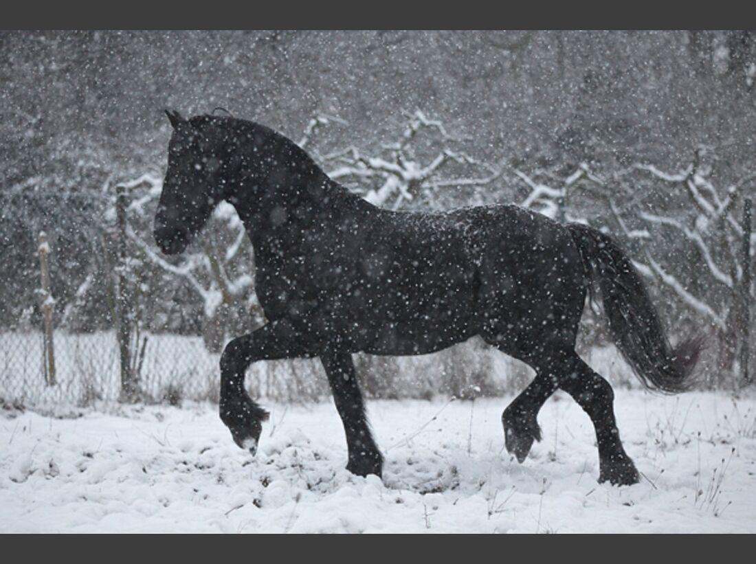 CAV Pferde im Schnee Winter 1