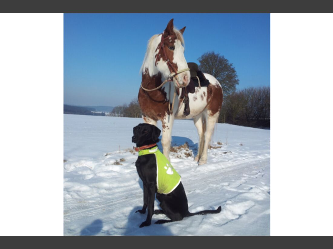 CAV Pferde im Schnee Winter 2012-10-30 10