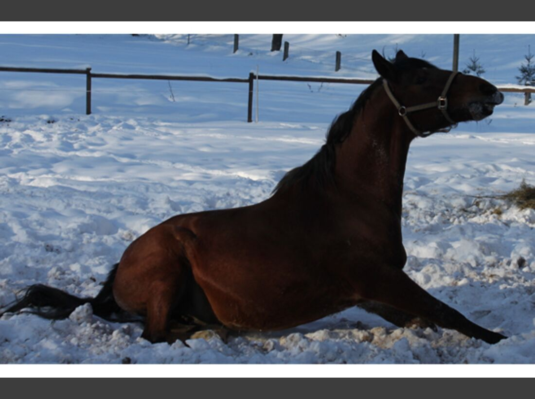 CAV Pferde im Schnee Winter 2012-10-30 6