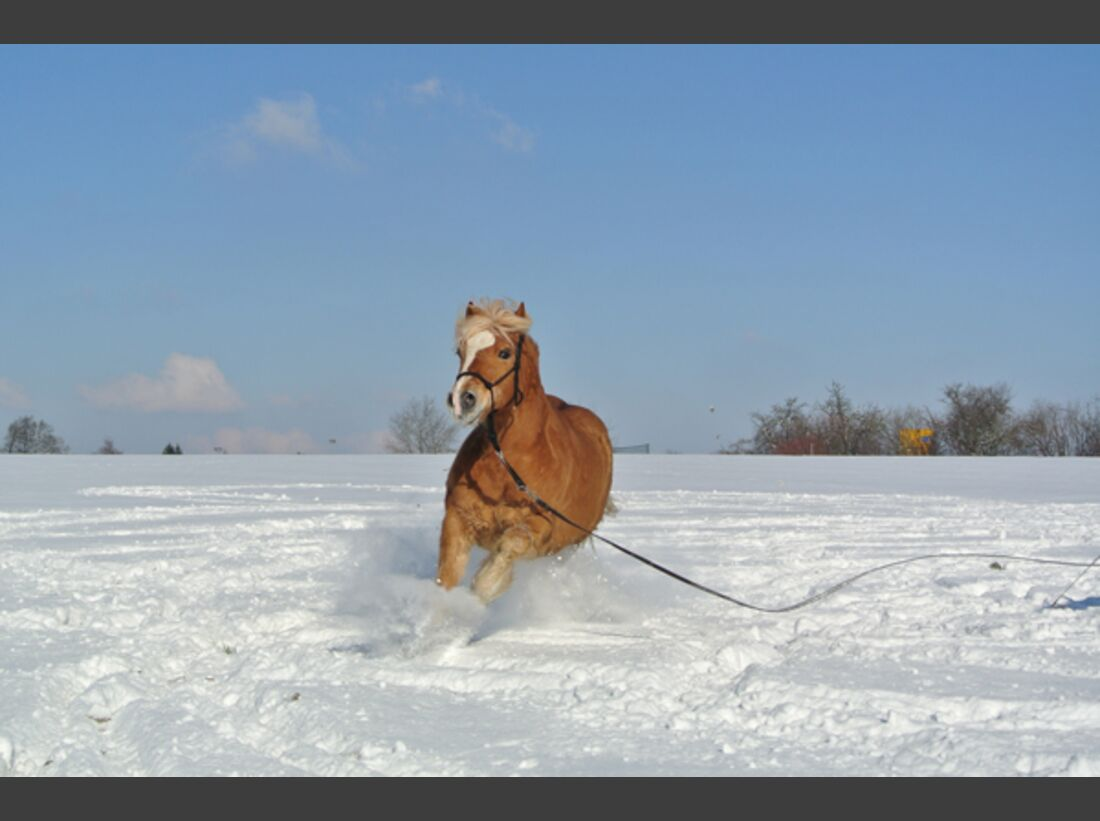 CAV Pferde im Schnee Winter 5