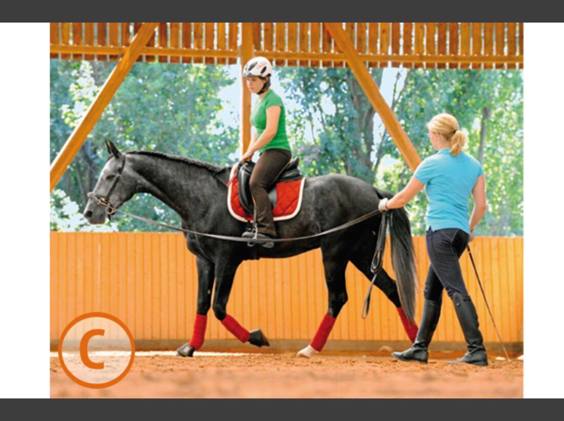 CAV Pferde kaufen Pferdekauf Junge Pferde C