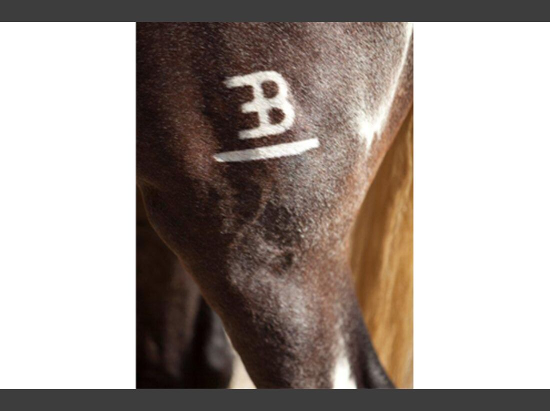 CAV Pferde wälzen 6