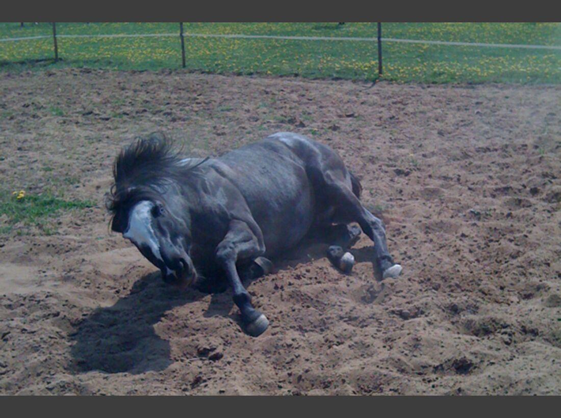 CAV Pferde wälzen Leserfotos 37
