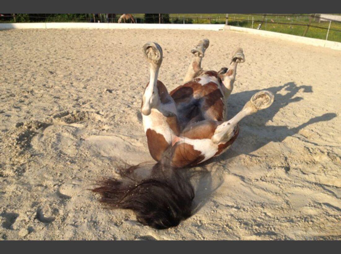 CAV Pferde wälzen Leserfotos 46