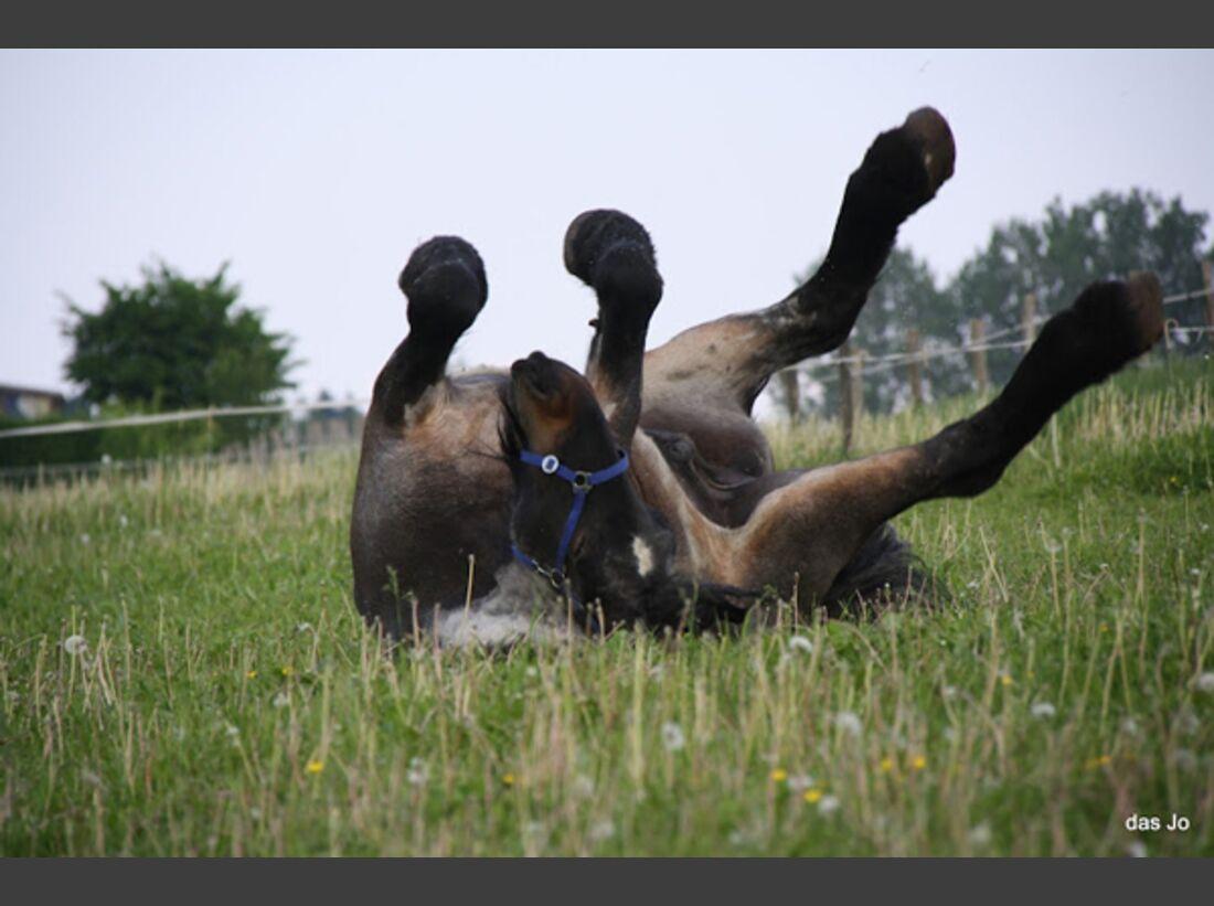 CAV Pferde wälzen Leserfotos 48