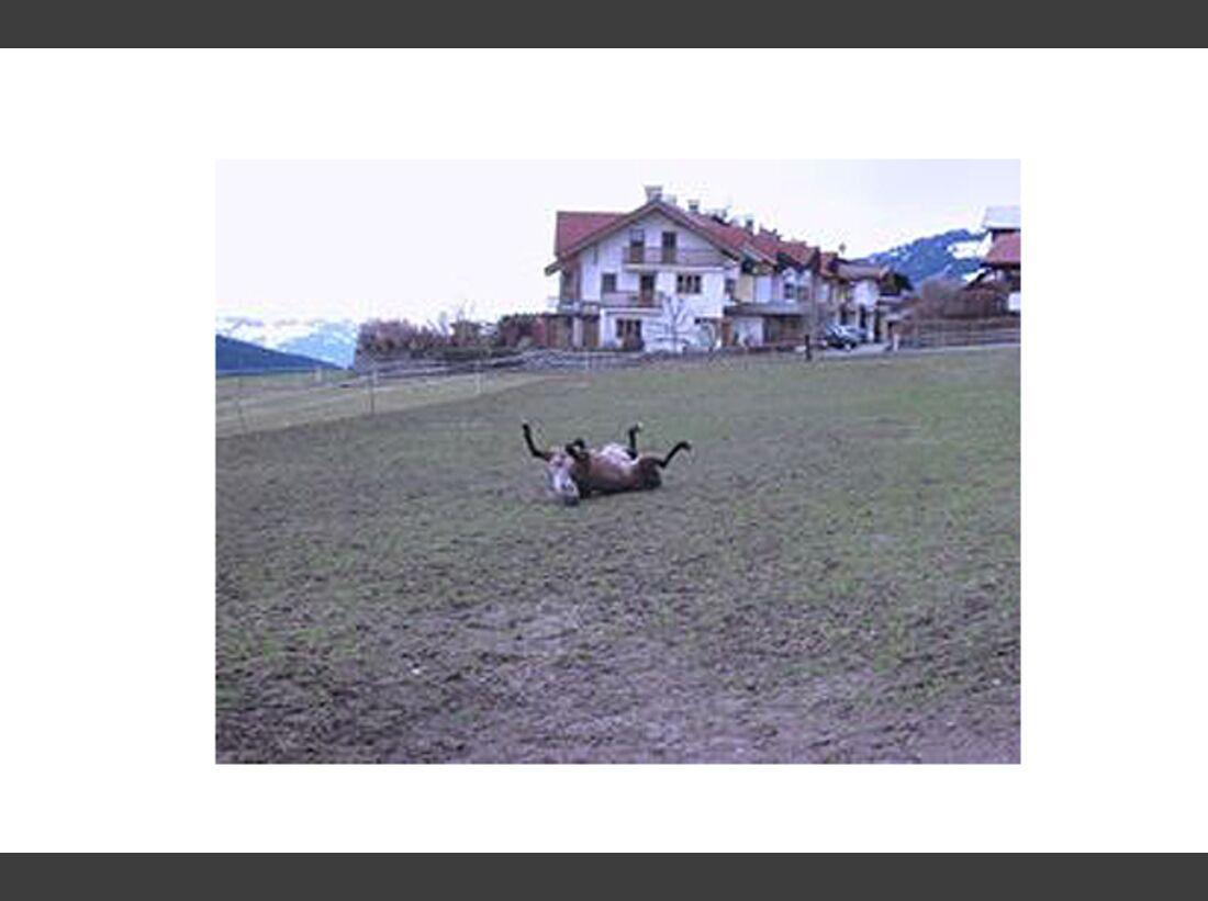 CAV Pferde wälzen Leserfotos 49