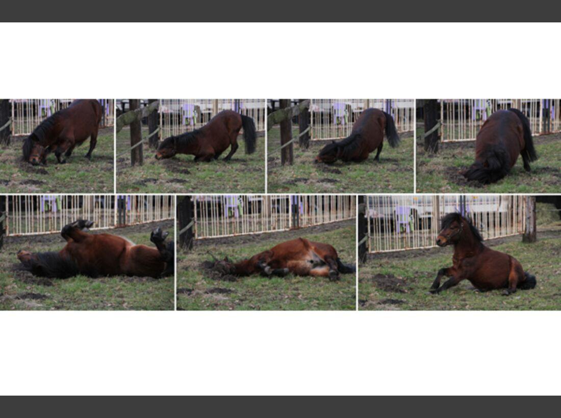 CAV Pferde wälzen Leserfotos 51