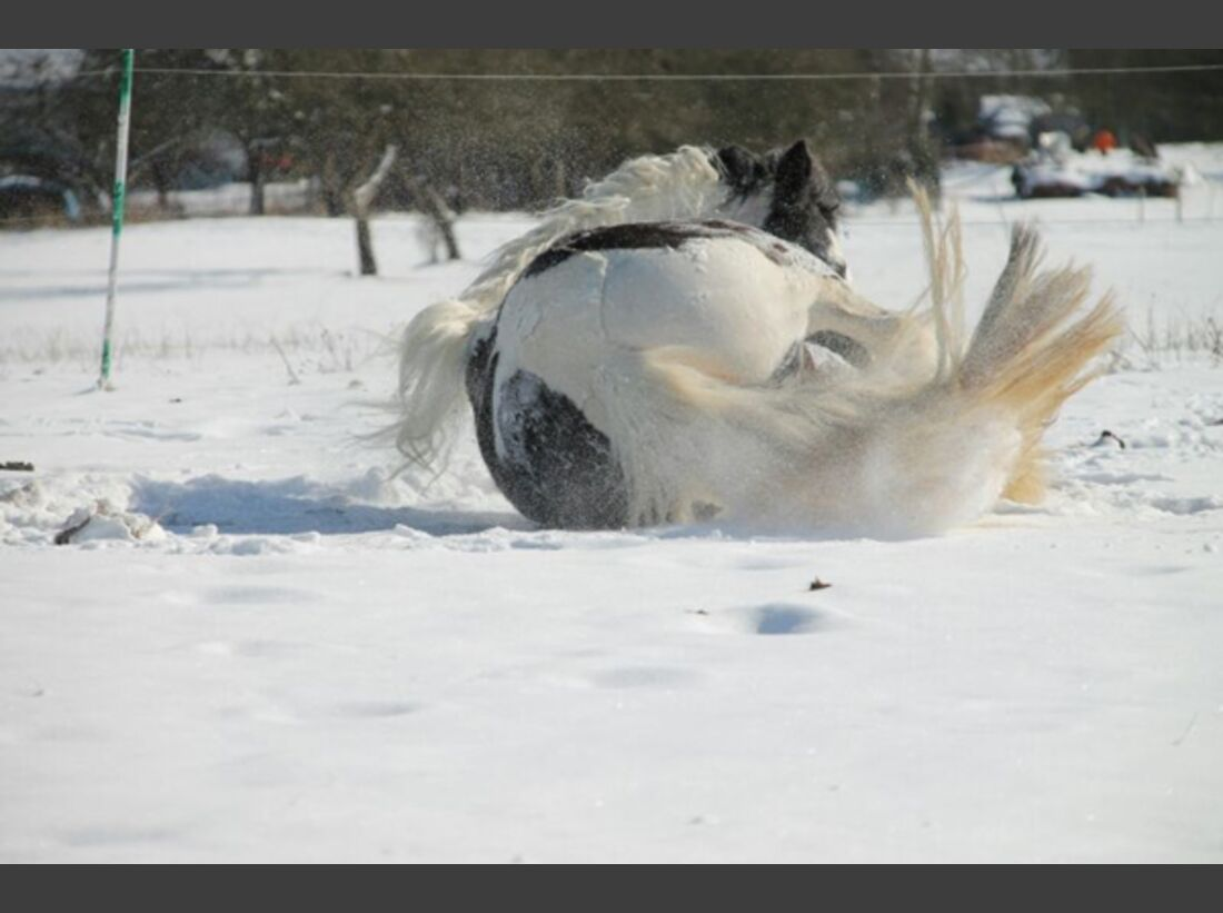 CAV Pferde wälzen Leserfotos 55