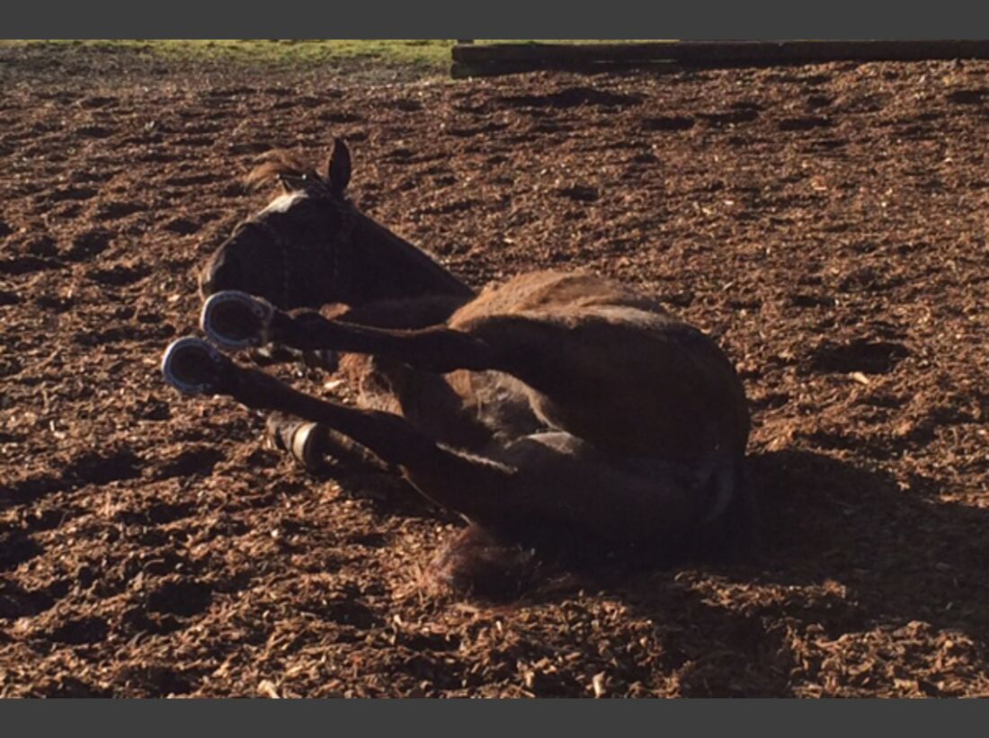 CAV Pferde wälzen Leserfotos 60