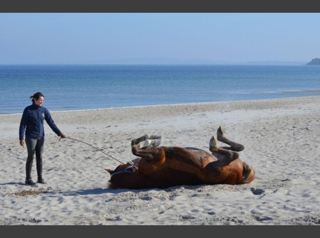 CAV Pferde wälzen Leserfotos 61