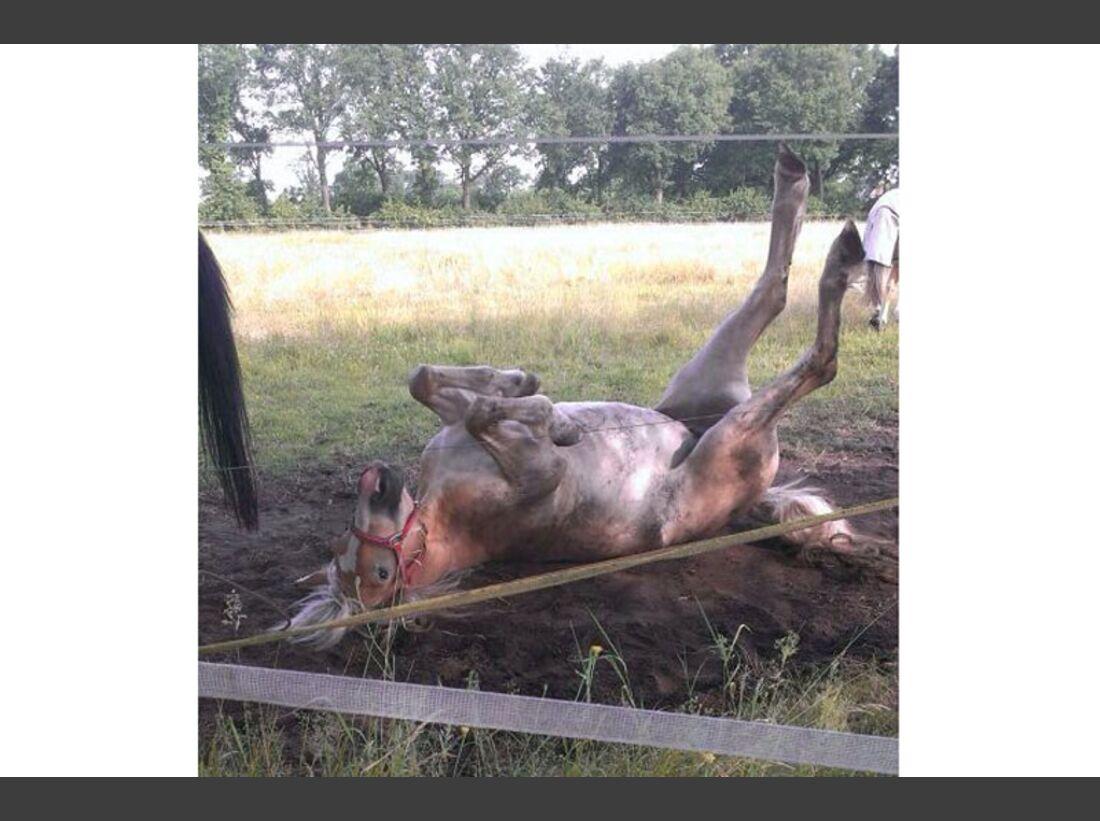 CAV-Pferde-wälzen-Leserfotos-Frauke-Hollwegs