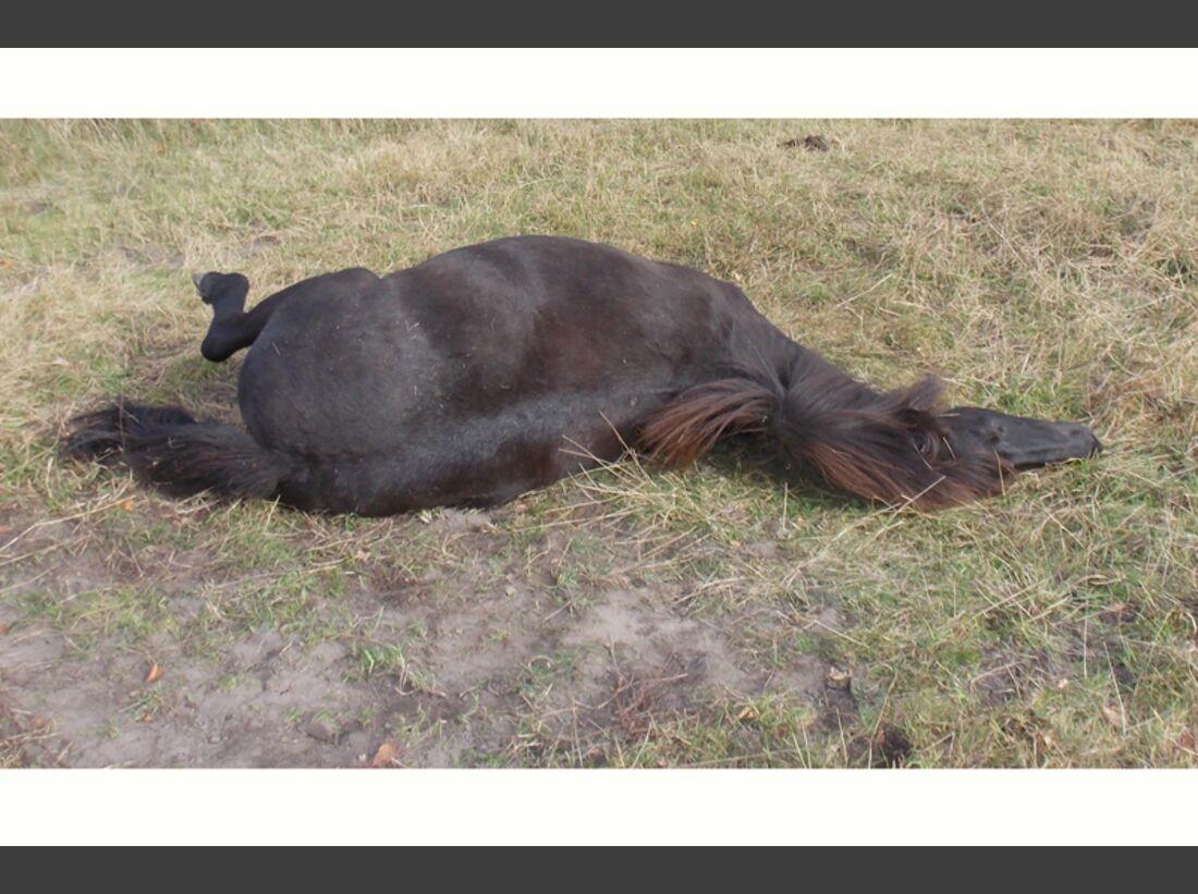 CAV-Pferde-wälzen-Leserfotos-Isi-Gydia