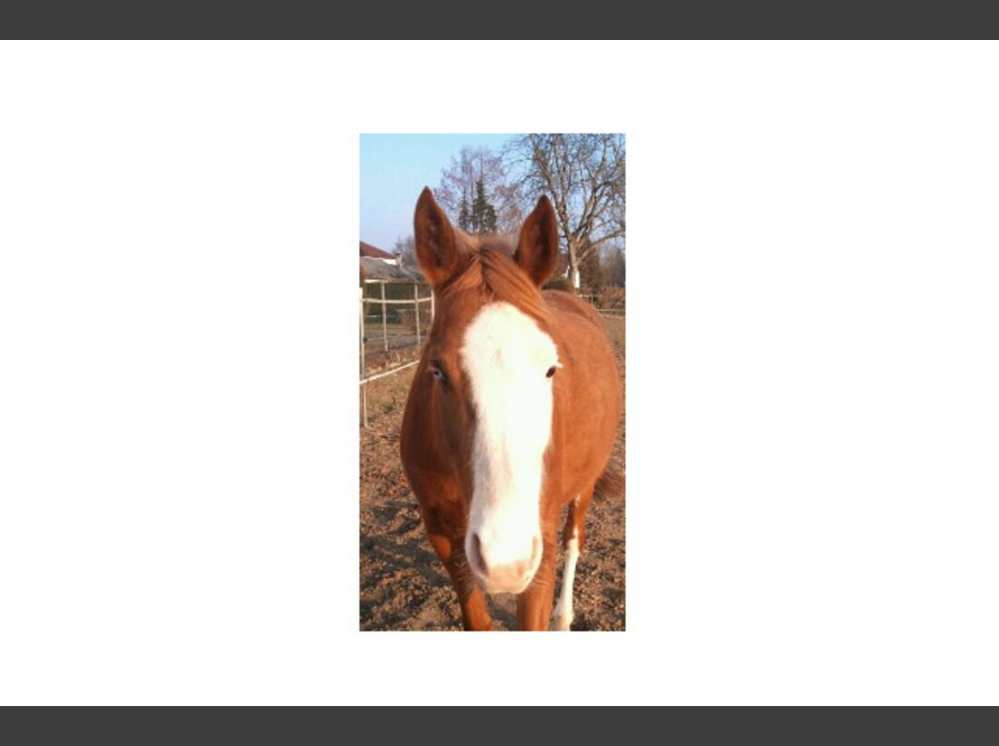 CAV Pferdeaugen Augen MS Vierthaler Christine