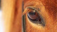 CAV Pferdeaugen Kimberly Lehmeier