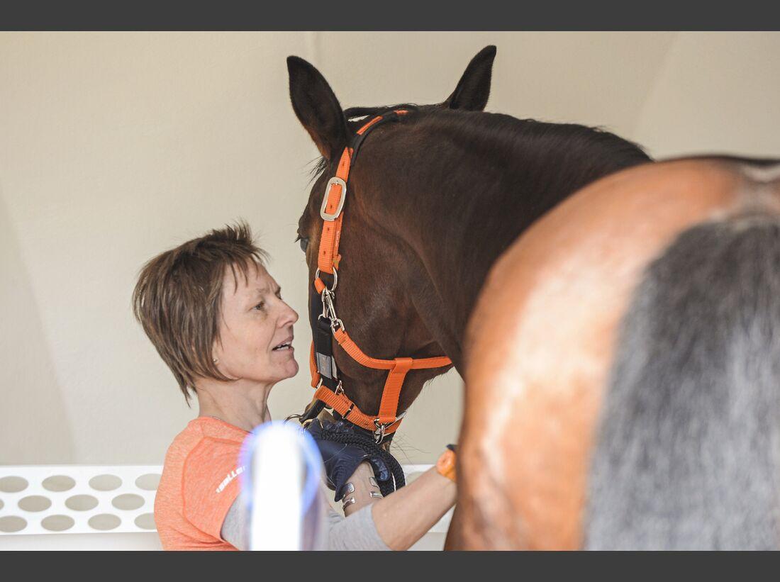CAV Pferdehänger Pferd verladen 11