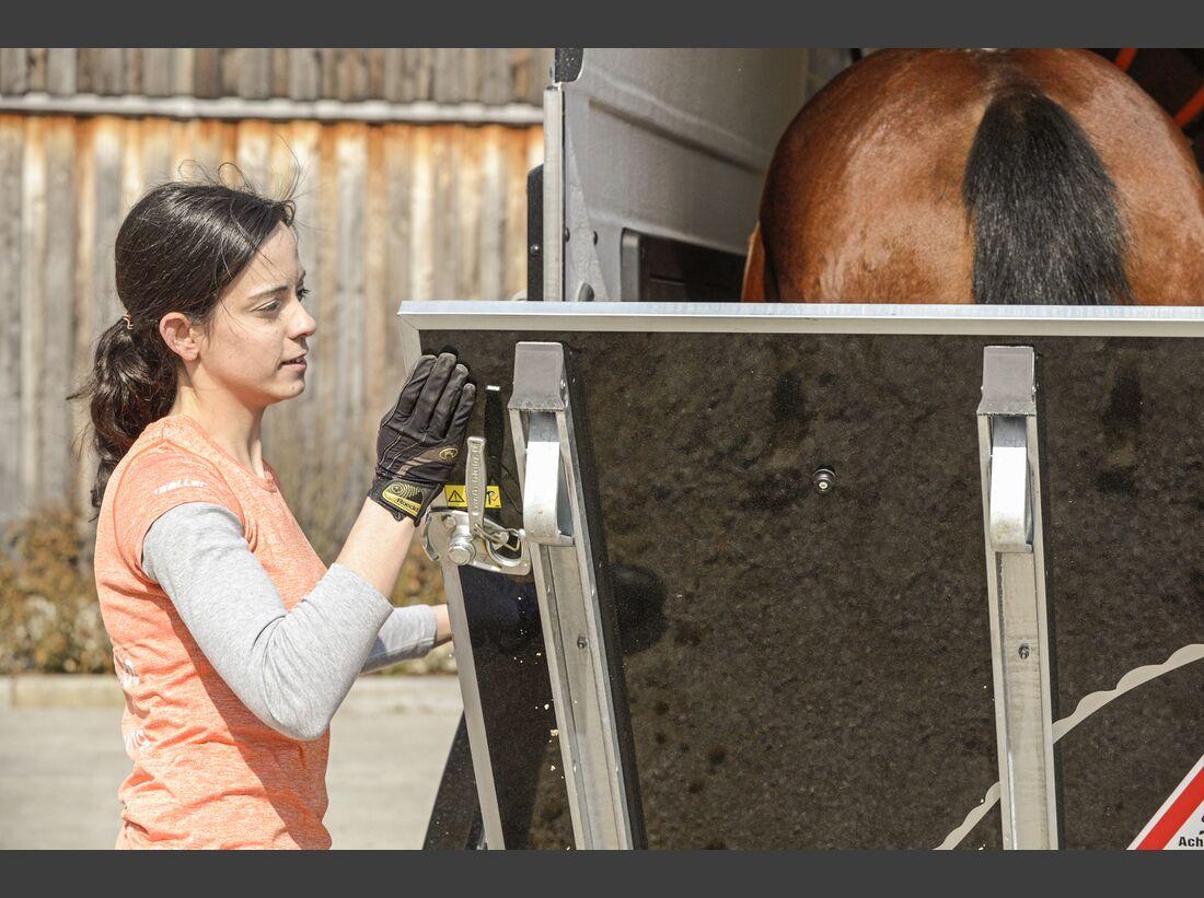 CAV Pferdehänger Pferd verladen 13