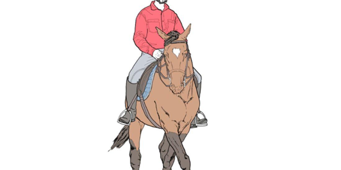 CAV Pferdekenner Knut Krüger Training Verhalten 13
