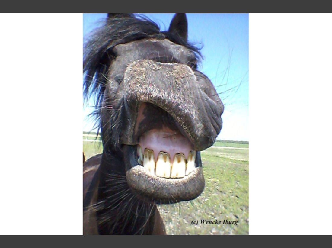 CAV Pferdenasen Nüstern Leserfotos 42