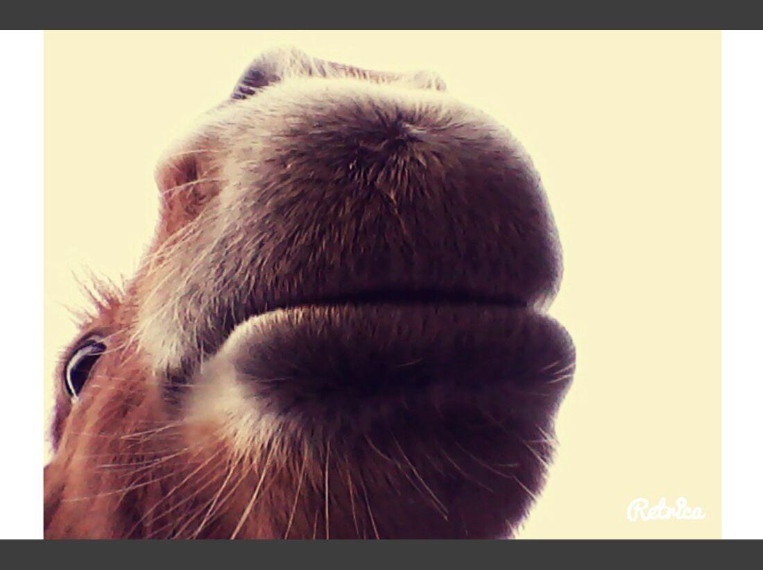 CAV Pferdenasen Nüstern Nase Leserfotos Jana Raich