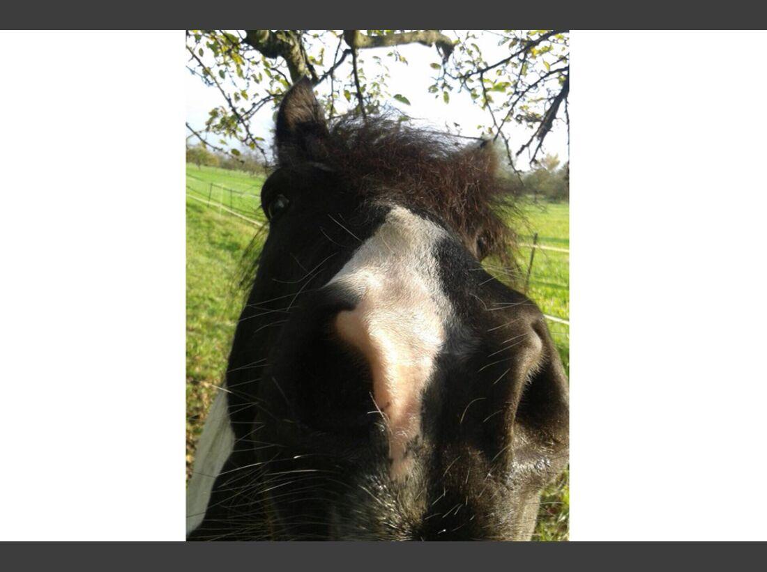 CAV Pferdenasen Nüstern Nase Leserfotos Nina