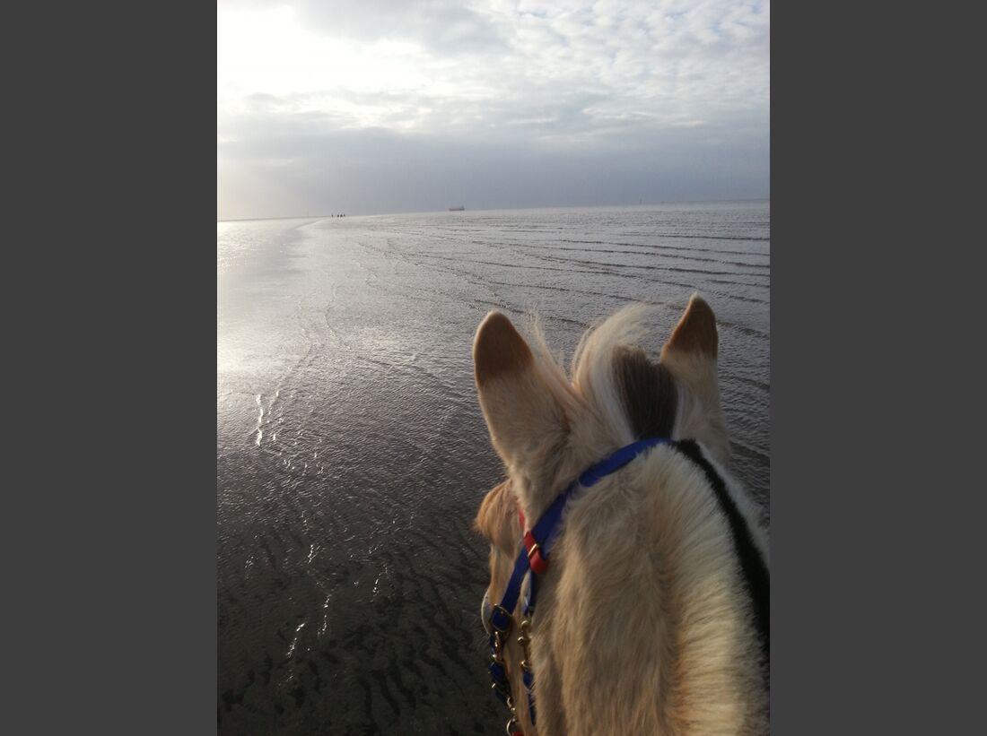 CAV-Pferdeohren-Stephanie-Mull