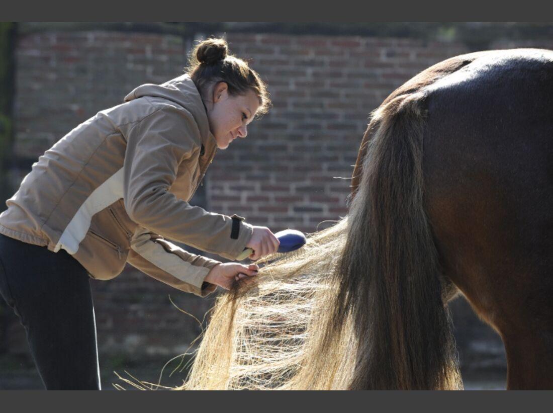 CAV Pferdepflege Pflege Putzen Putzzeug Bürsten