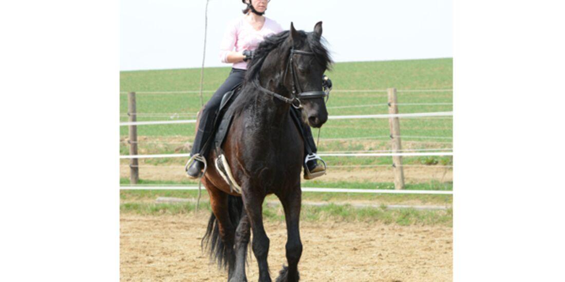 CAV Pferdetausch 8