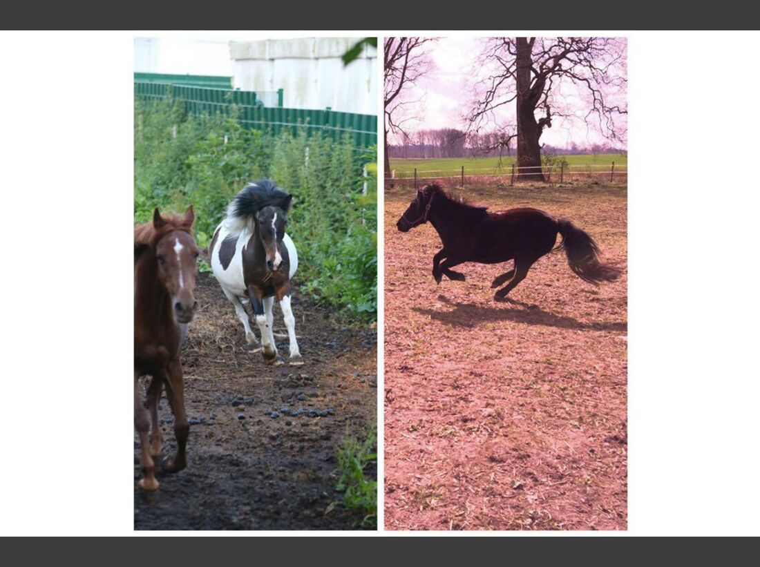 CAV Pony Anabel Hilpert