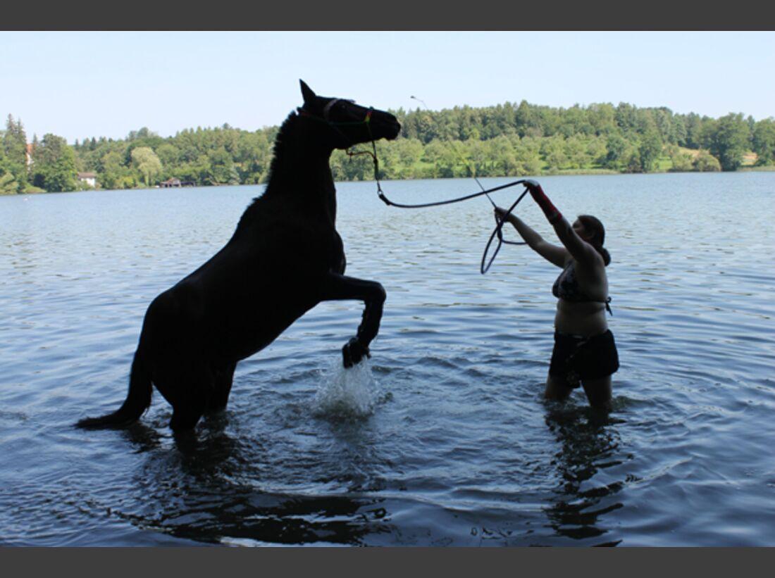 CAV Pony Leserfotos 17