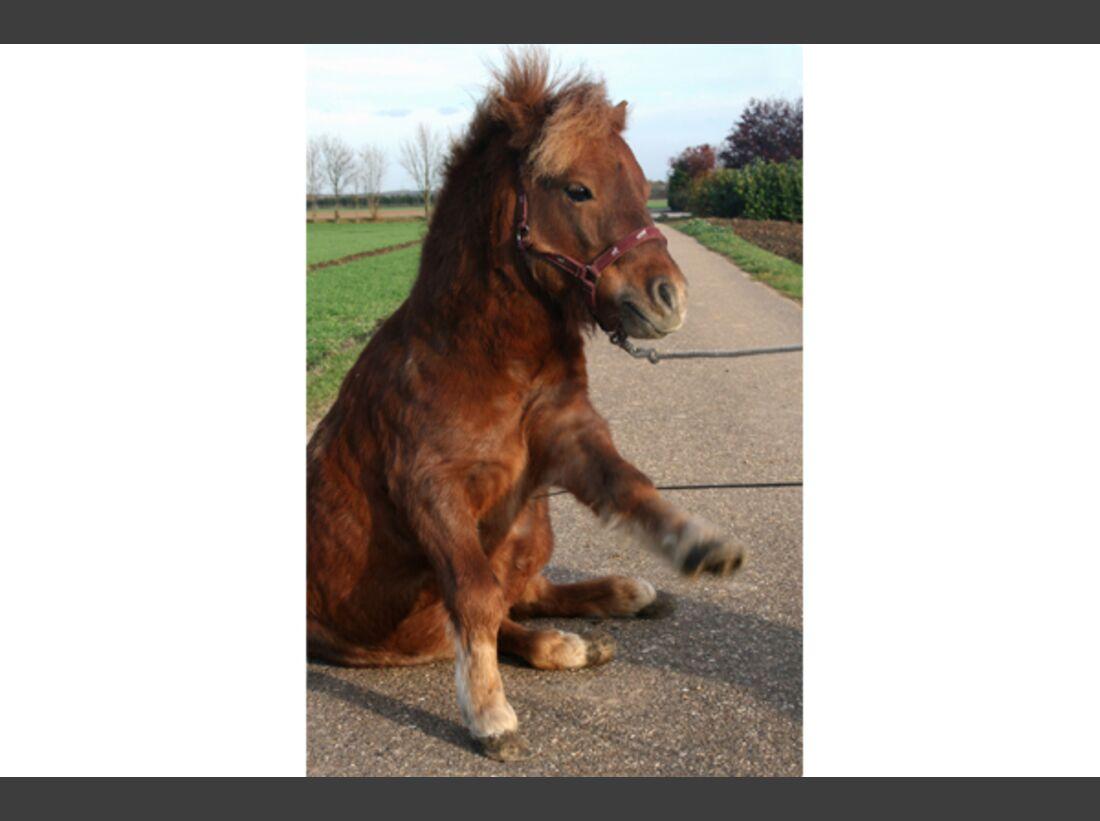 CAV Pony Leserfotos 33