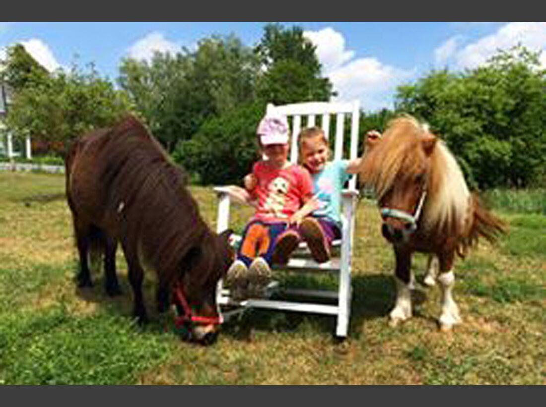 CAV Pony Susi Gahr