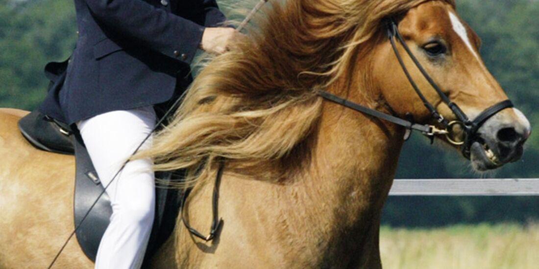 CAV Rechtserie Pferdekauf Mängel 010209 Mertens