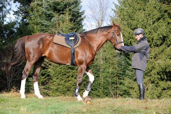 CAV Reiten im Winter Pferde Ausbildung Andreas Frey 3