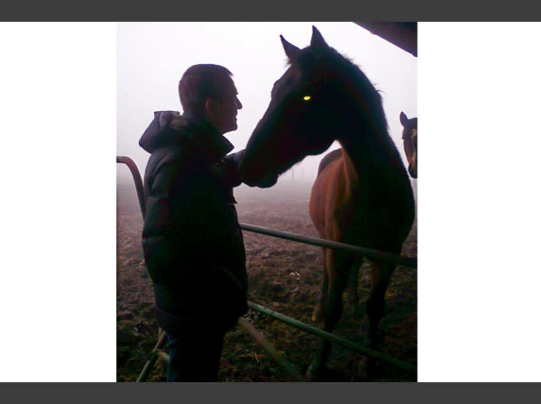 CAV Schräg Witzig Skurril aus der Pferdewelt Pferdefotos 10