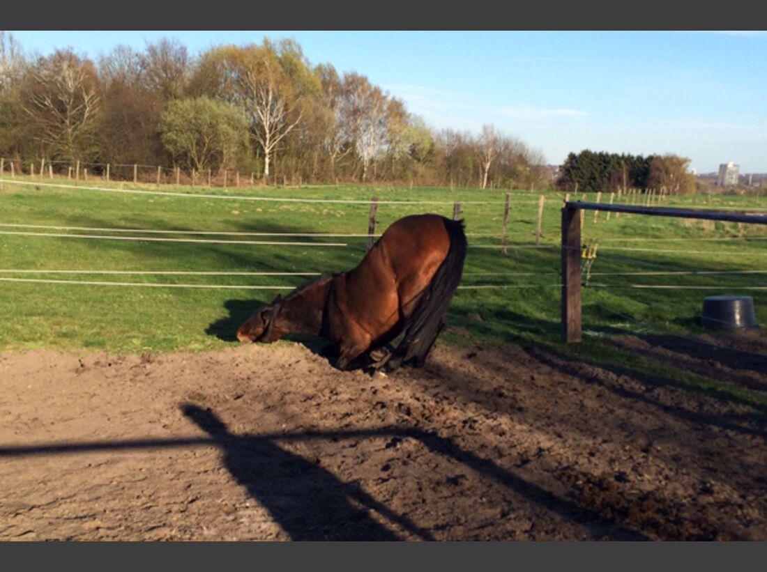 CAV Schräg Witzig Skurril aus der Pferdewelt Pferdefotos 80