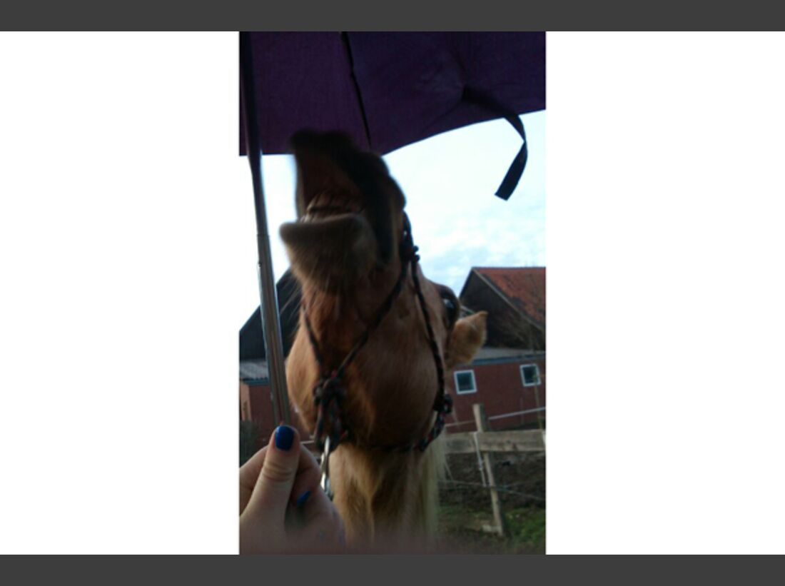 CAV Schräg Witzig Skurril aus der Pferdewelt Pferdefotos 82
