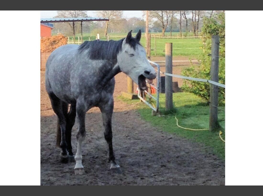 CAV Schräg Witzig Skurril aus der Pferdewelt Pferdefotos 83