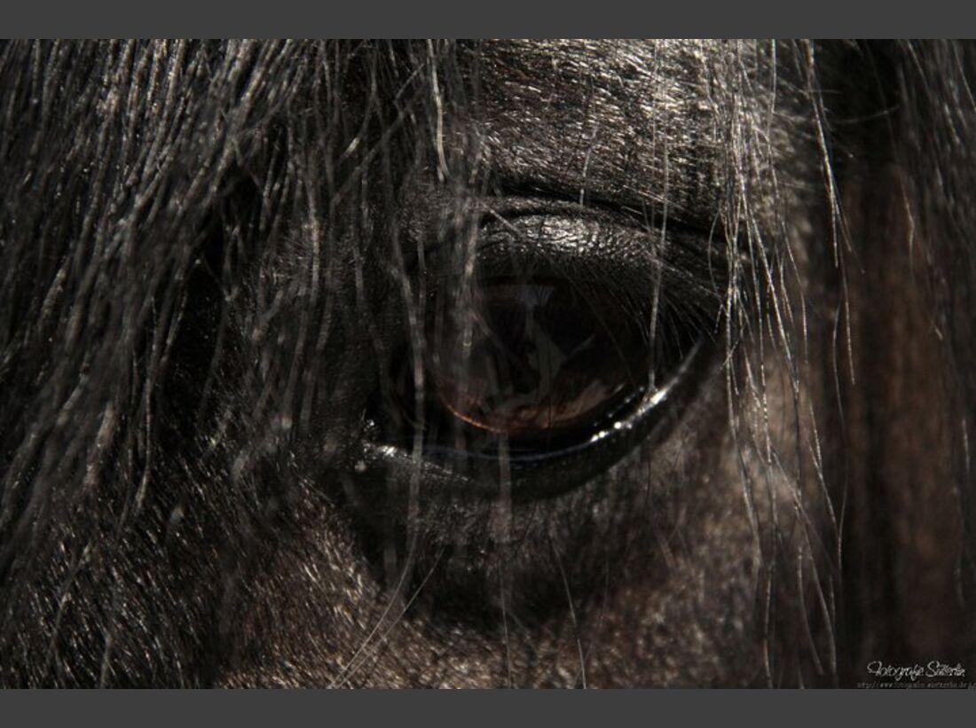 CAV Senioren  Pferdesenioren alte Pferde MS Drybarrows