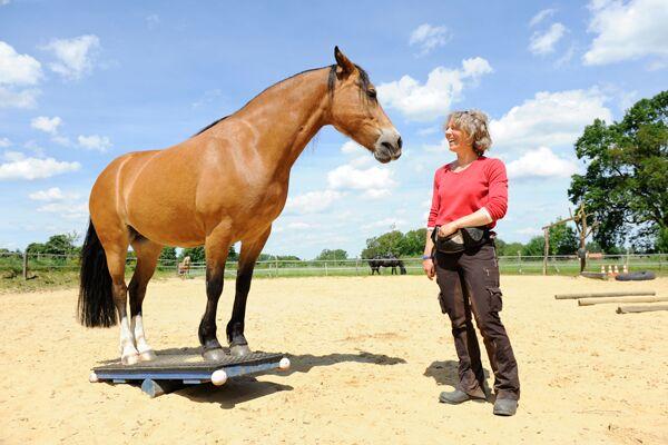CAV Sinne Pferde 2