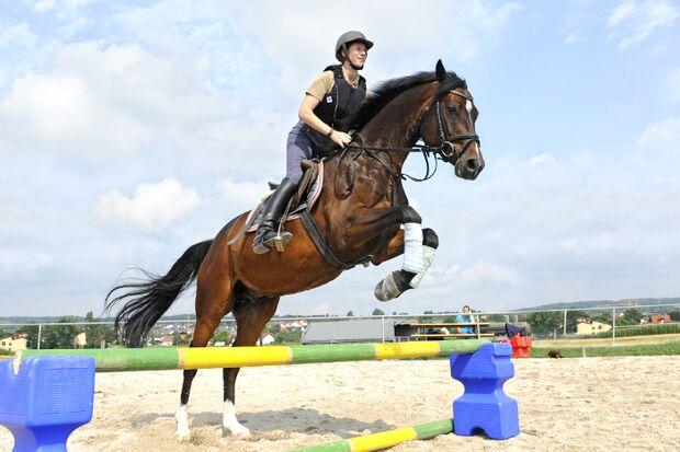 CAV Springen Cavaletti Sprung Pferd Springreiten