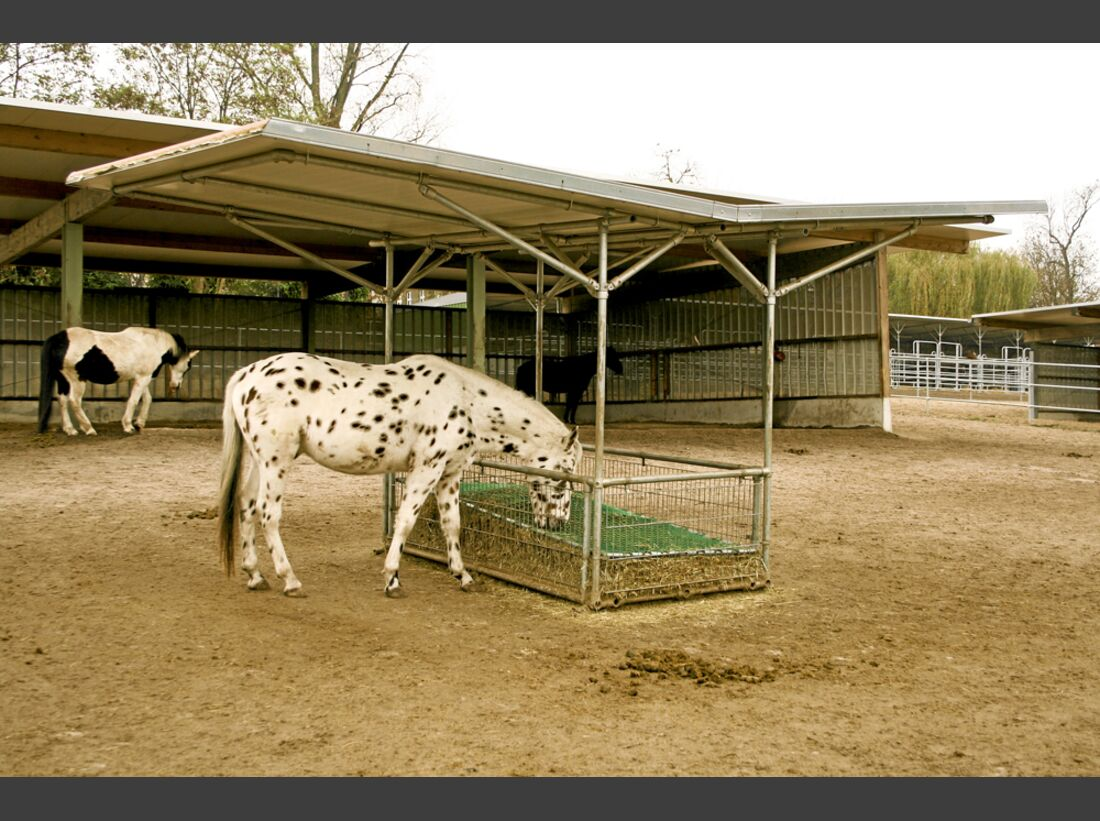 CAV Stall Scout 03_2014 Aktivstall Heinrichshof 3