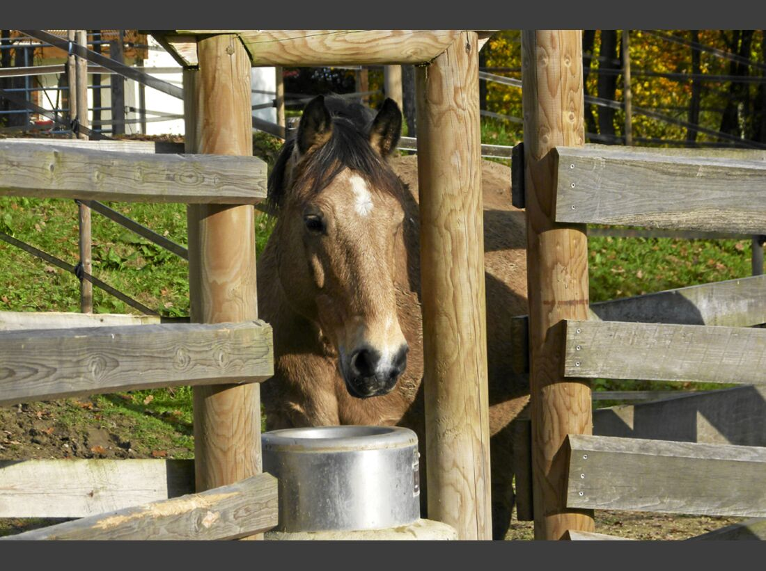 CAV Stall Scout 04_2015 Aktivstall Gnellenroth 2