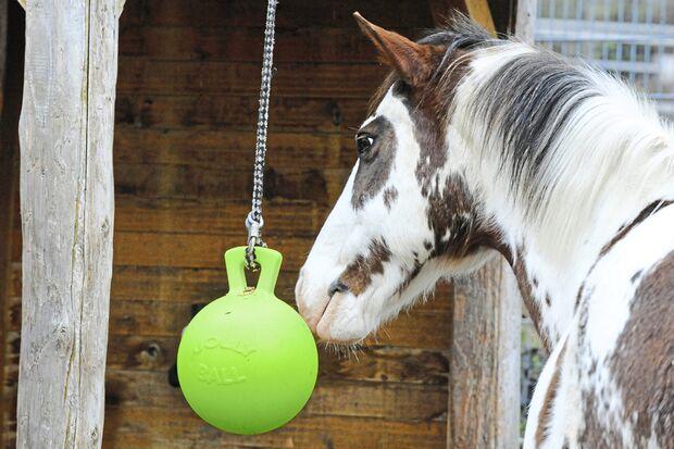 CAV Test Schadstoffe Plastikspielball Pferd