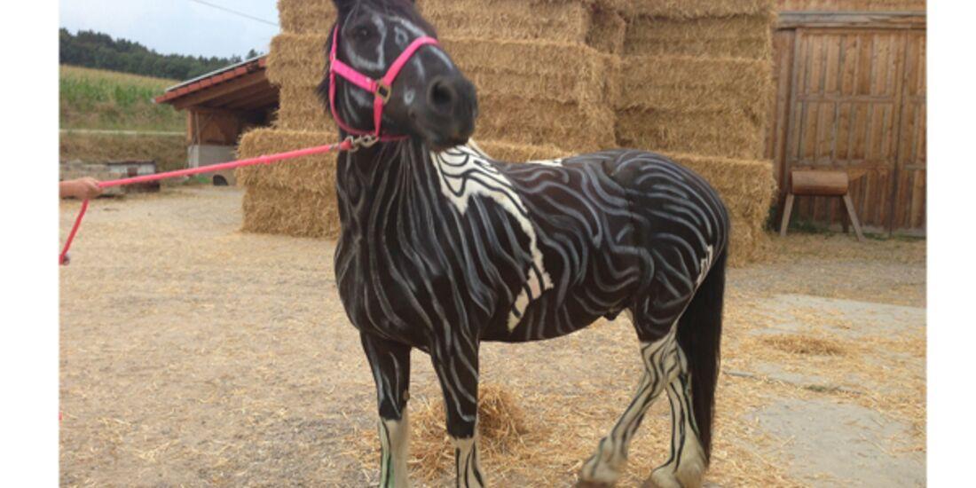 CAV Zebra Leserfotos 20
