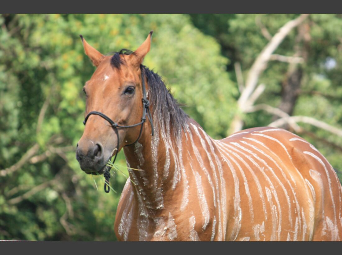 CAV Zebra Leserfotos 4