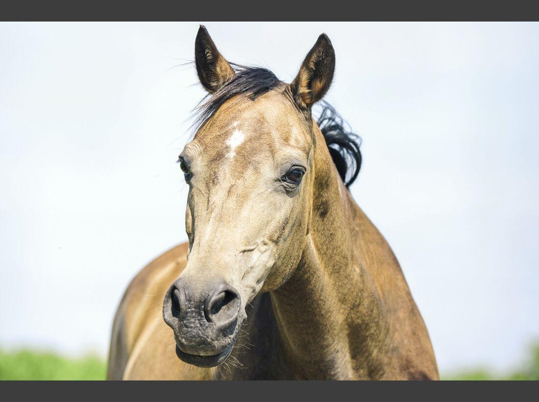 CAV alte Pferde Pandora alt
