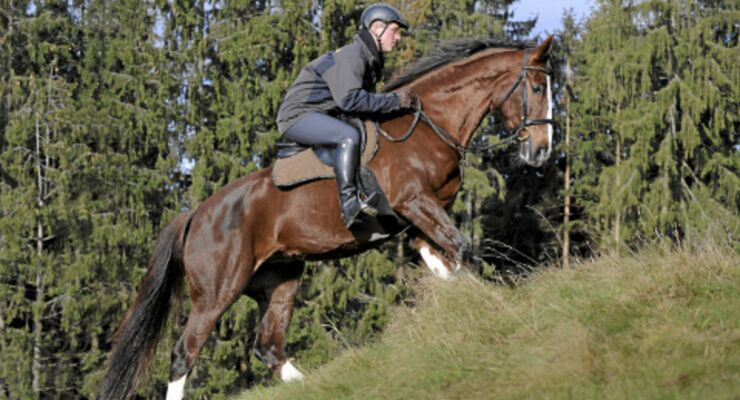 Pferde-Training im Winter - Klettern