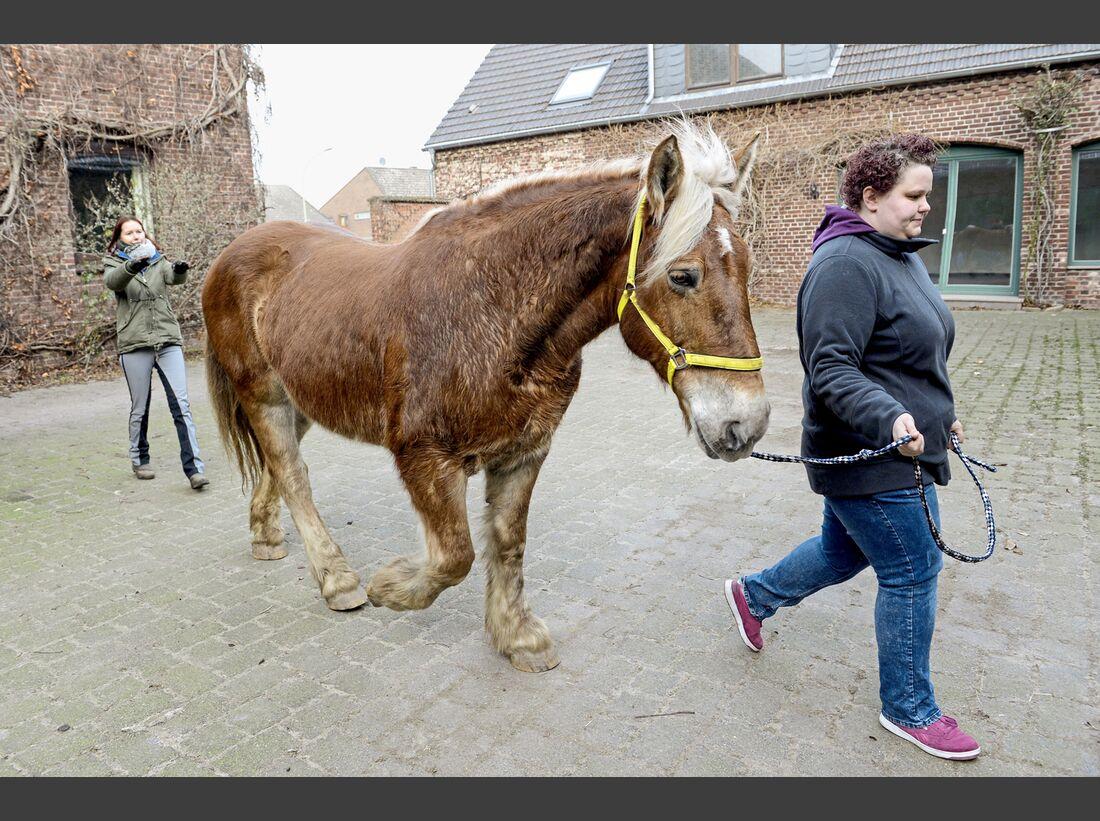 cav-201903-cavallo-coach-1-lir2067-v-amendo-schlank (jpg)