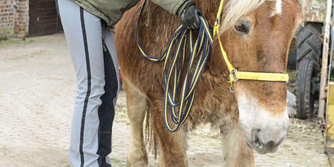 cav-201903-cavallo-coach-g6-lir2368-v-amendo (jpg)